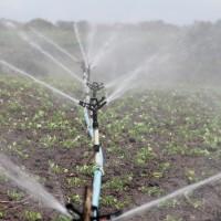 Nawadnianie ogrodu – 4 popularne rozwiązania