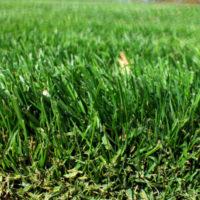 Piękny i zadbany trawnik – narzędzia