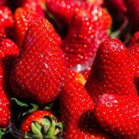 Nowość w Twoim ogrodzie – truskawki frigo